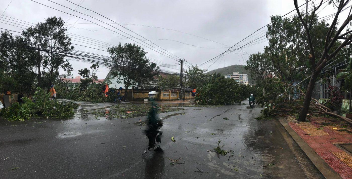 Những hàng cây cổ thụ trên đường Hòn Chồng đã không thể trụ nô