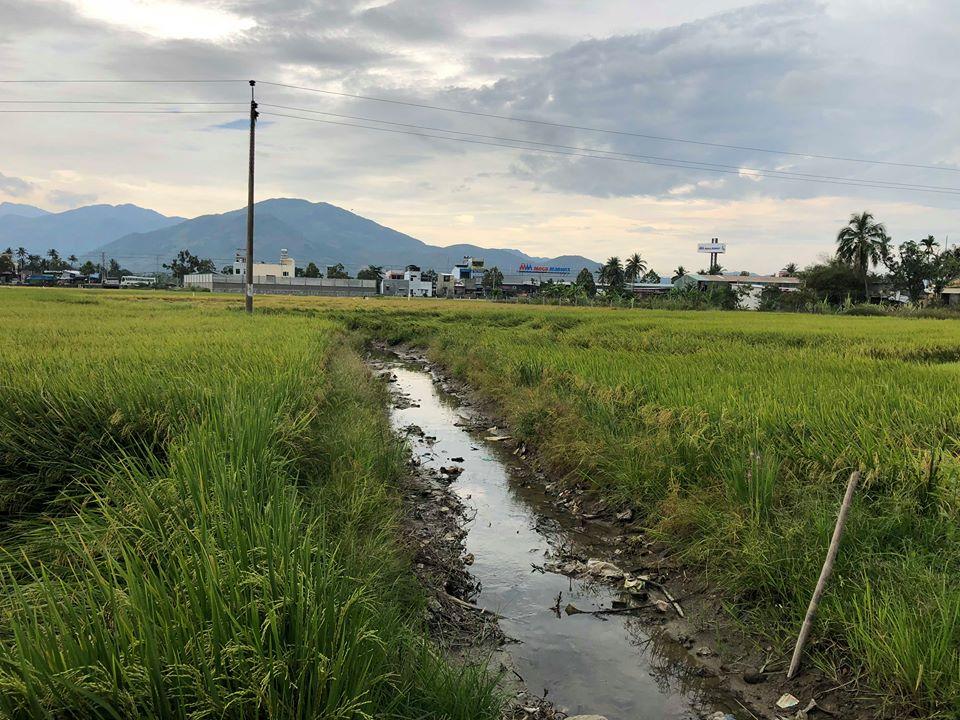 Khu đất được người dân khu vực này cho biết là đang quy hoạch Khu dân cư An Lạc.
